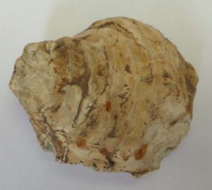 65 Million Year Old Fossil